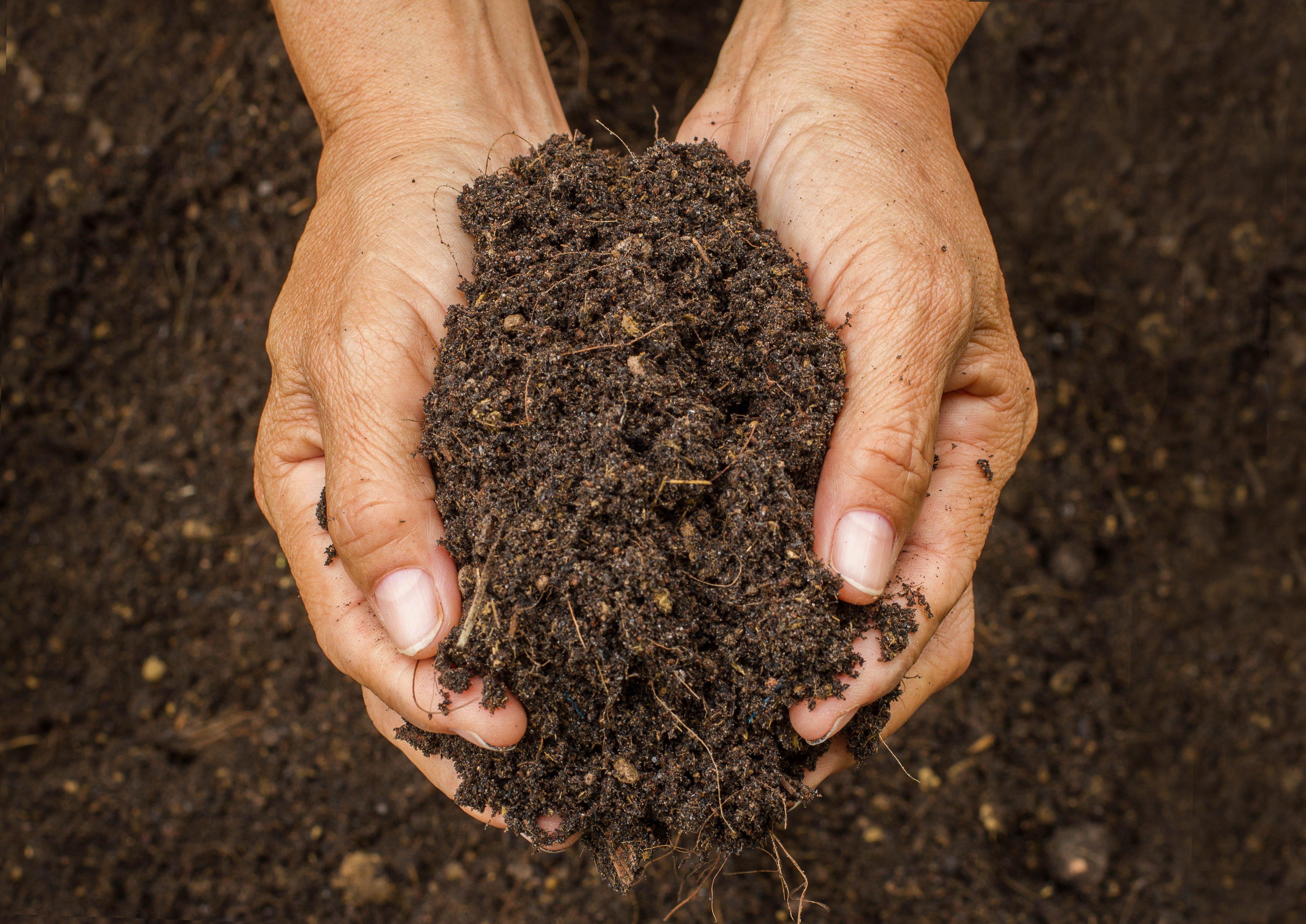 Landscape Life Alert: Reviving Compact Soil