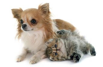 Dog and Cat - Pet Grooming in Saugerties, NY