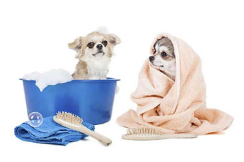 Two Dogs - Dog Grooming in Saugerties, NY