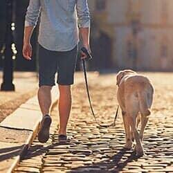 Dog Walking Service Washington Dc Metro Mutts Pet Services