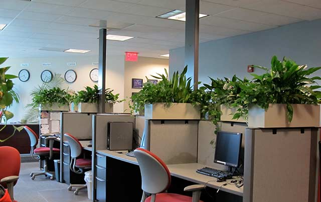 Plants Inside Office   Interior Plantscaping In Orlando, FL