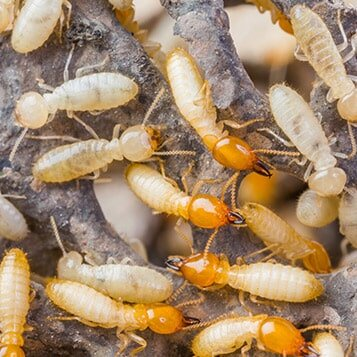 Pest Control In Peachtree City Ga