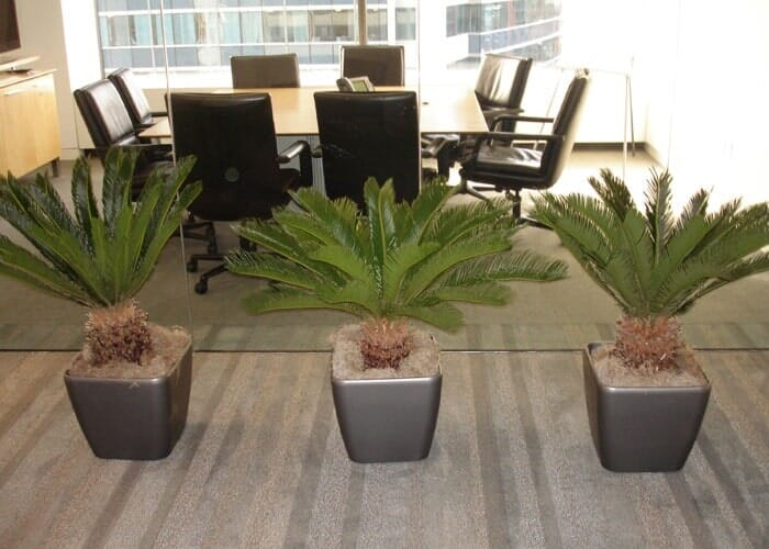Plants Designing U0026 Maintenance U2014 Inside Office With Three Plant Box In  Chicagoland, ...