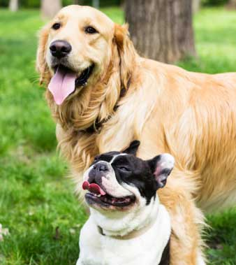 Kennel Free Dog Boarding Seattle