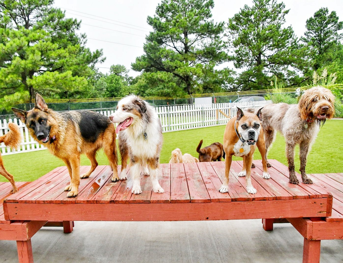 Dog Boarding Springdale Ar