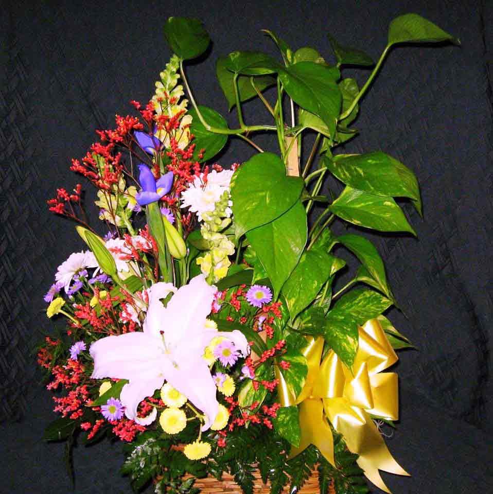 Flower Delivery Roanoke Va Flowers Things