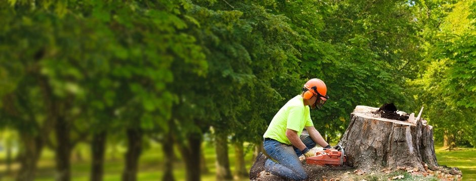 Home | Waters Tree Service - Pooler, Ga