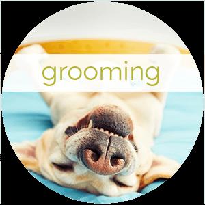 Best Dog Grooming Racine Wi