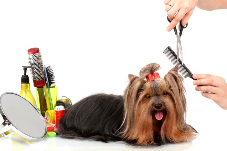 Grooming glen burnie md maryland mobile grooming dog grooming maryland mobile grooming in glen burnie md solutioingenieria Gallery