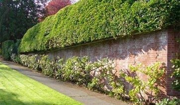 Landscaping Company Bothell Wa