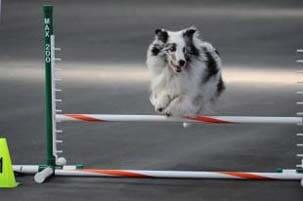 Dog Training - Lakewood, CO - Mantayo Kennels & Dog School