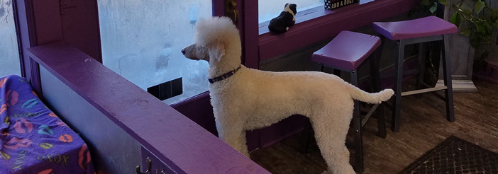 Dog looking outside the window - Dog Salon in Tonganoxie, KS