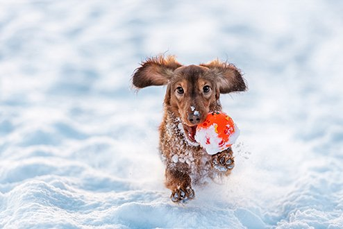 How to Keep Your Dog Happy and Healthy This Winter