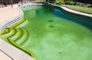 How To Get Rid Of Swimming Pool Mold