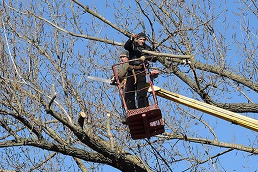 Trusted Tree Service Aberdeen Wa J Amp L Tree Service