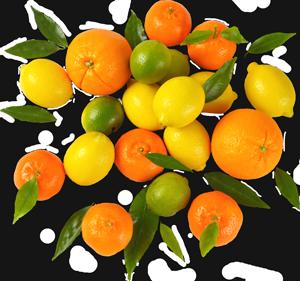 Exotic Fruits   St  Petersburg, Florida   Jene's Tropicals