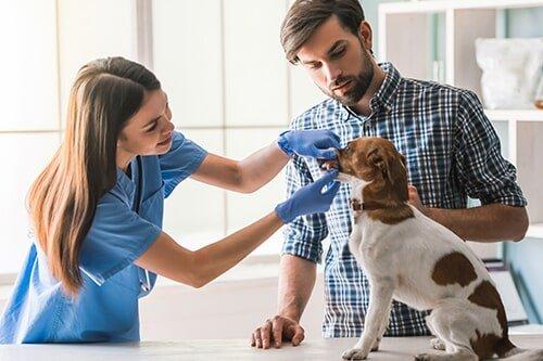 Veterinary services garden grove ca community - Garden grove dog and cat hospital ...