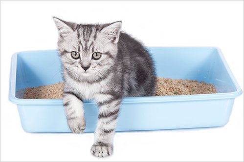 Why Is Your Cat Urinating Outside of the Litter Box?