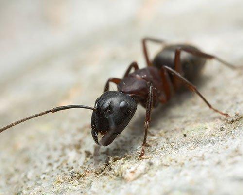 La Pest Control Los Angeles Ca Johnny Rat Pest Control