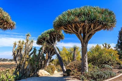5 Shade Trees That Can Handle The Challenges Of The Mojave Desert