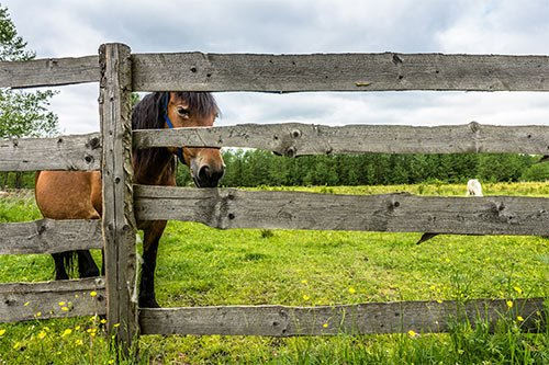 4 Benefits Of Wood Fencing For Horses