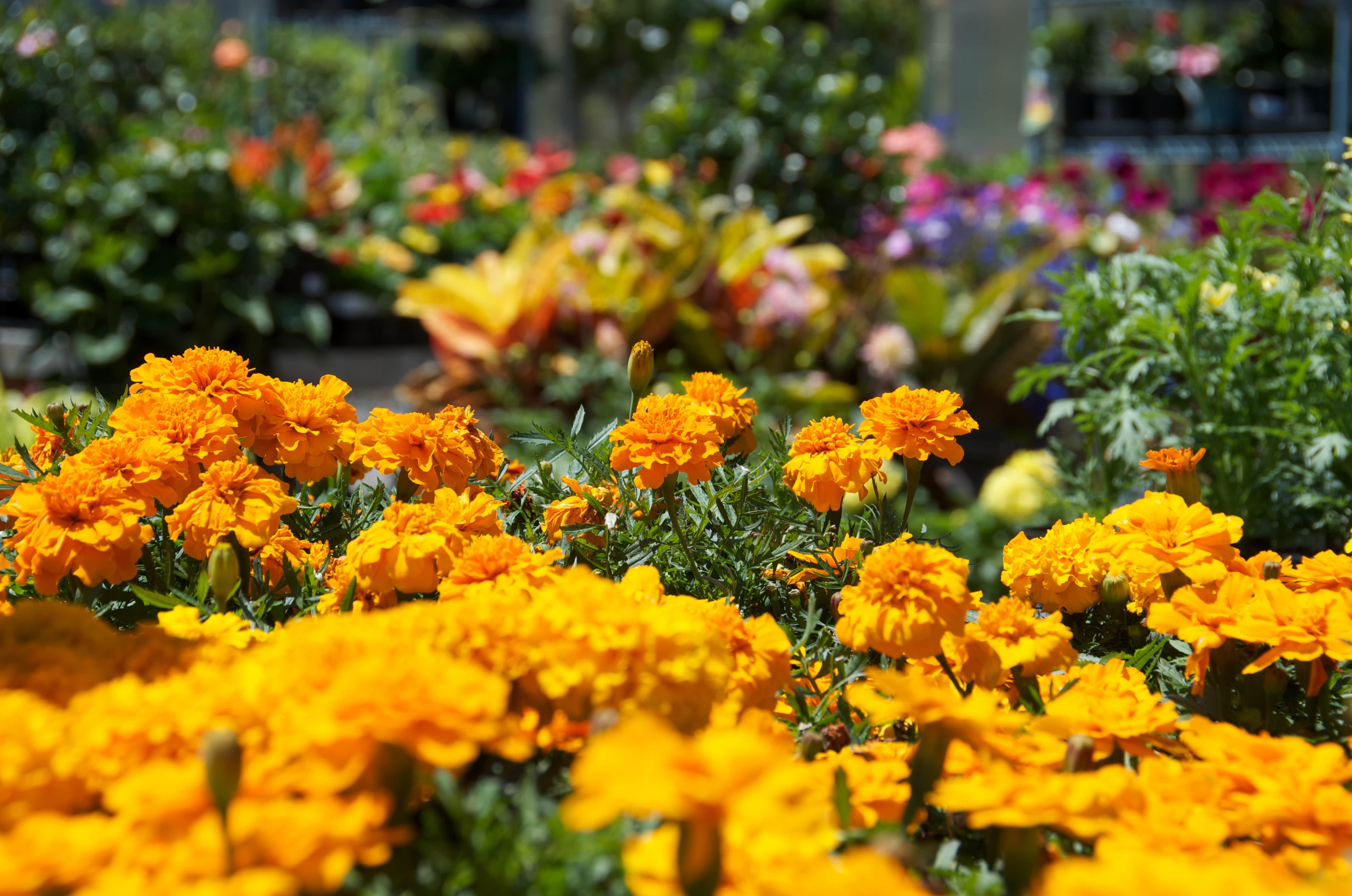 Annual and perennial flowers pittsburgh pa best feeds garden annual flowers best feeds garden centers gibsonia pa pittsburgh pa izmirmasajfo