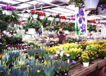 Garden Nursery Kingman Ks Southwestern Nurseries