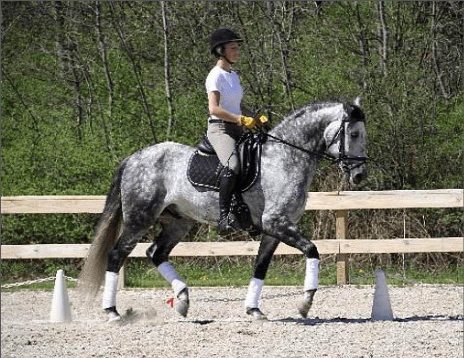 Horse Stables Cazenovia Ny Tour