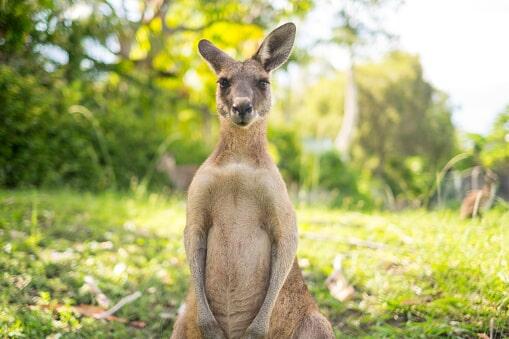 kangaroo farm arlington wa the outback kangaroo farm