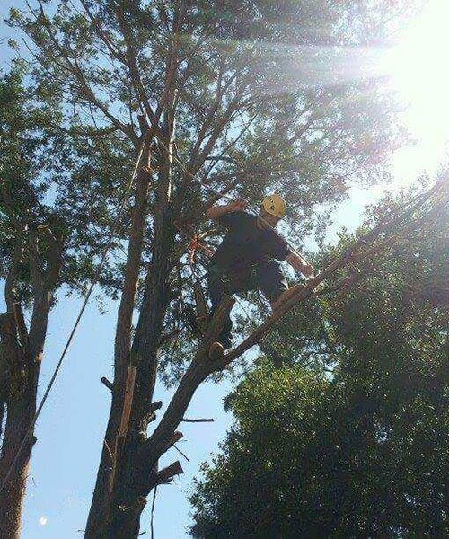 Gallery A Cut Above Tree Care Amp Landscape Inc