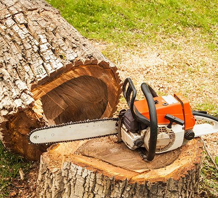 Stump Grinding And Removal Pittsburgh Pa Perkins Tree