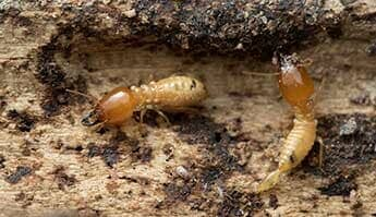 Bugs/Pests - Newton, NC - H & H Pest Control & Waterproofing