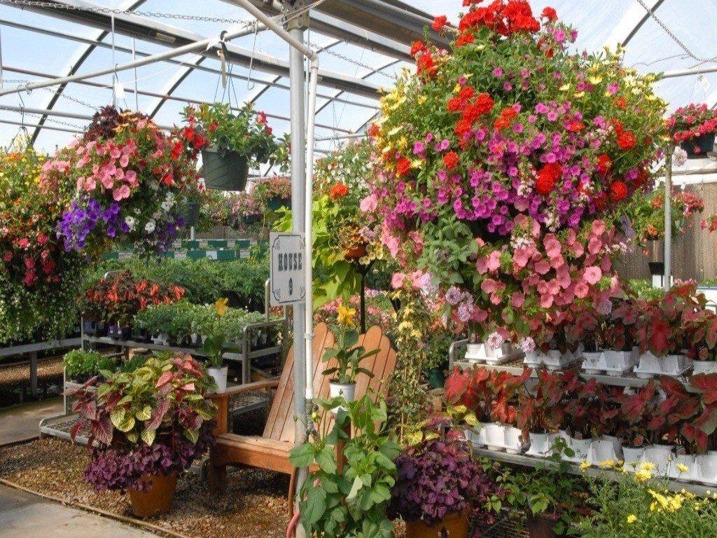 Nursery Longmont Co The Flower Bin