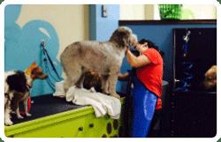 Self serve dog wash centennial co bark n wash dog grooming dog groomer in centennial co 3 off on your first self serve solutioingenieria Choice Image