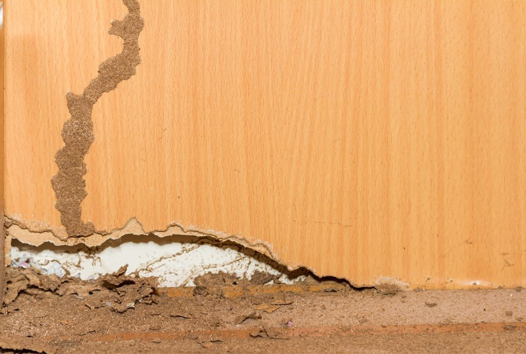 Treat Your Foundation Subterranean Termite Infestation With Beneficial Nematodes