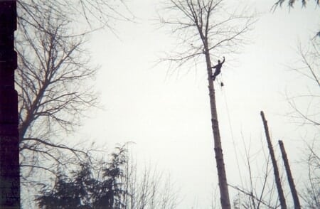 Tree Trimming Services In Mill Creek Wa