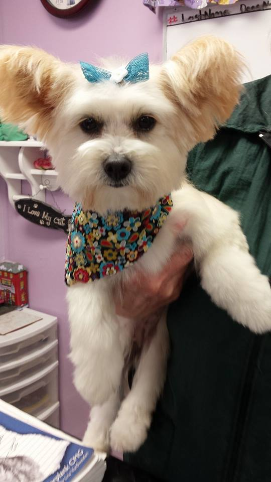 Dog salon fayetteville nc cheryls best friends pet grooming lovely dog pet groomers in troy nh solutioingenieria Gallery