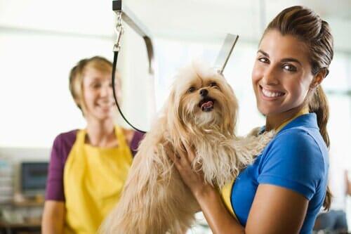 Pet groomer lakewood co uncle dans pet grooming dog grooming grooming services in lakewood co solutioingenieria Gallery