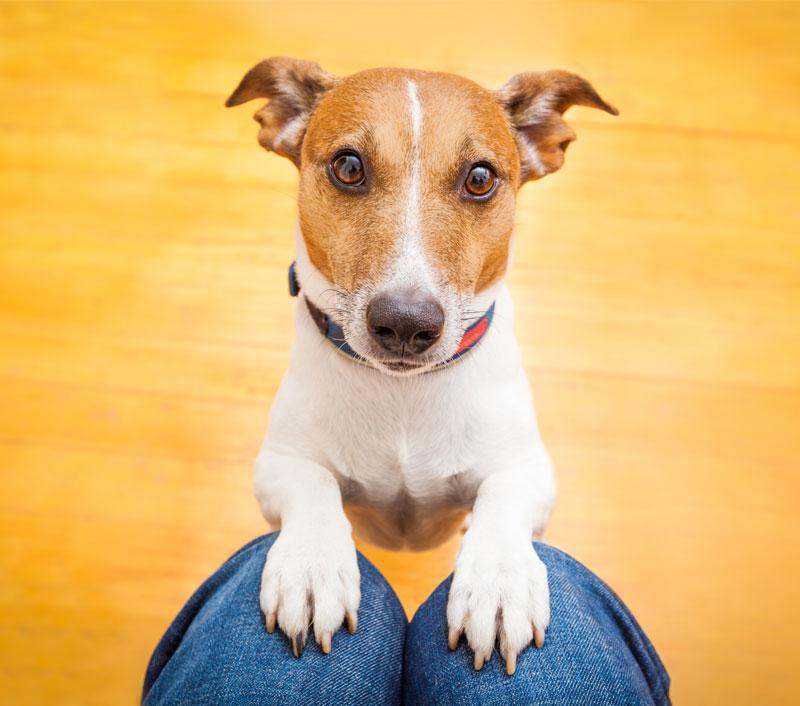The Dog House Menifee