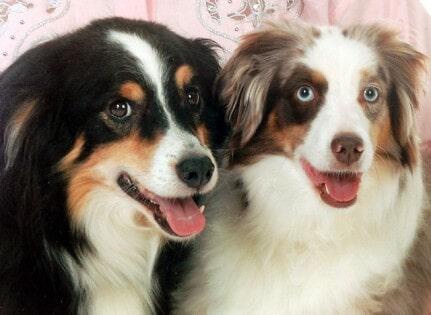 Home marysville wa k 9 villa pet styling salon smile two dog in marysville wa solutioingenieria Gallery