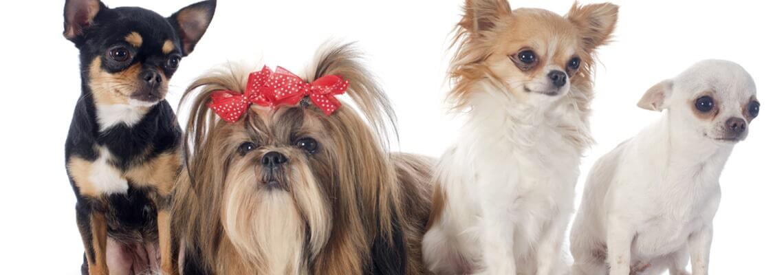 Home marysville wa k 9 villa pet styling salon solutioingenieria Gallery