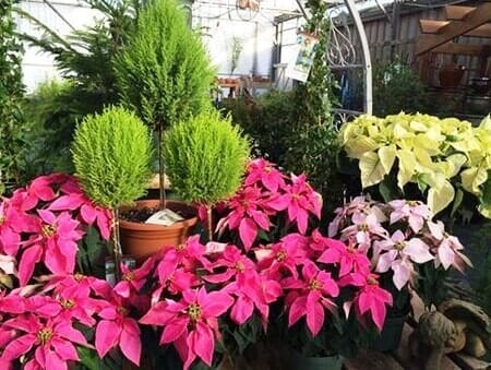 Landscapers | Garden Center — Madison, Alabama — The Enchanted Forest