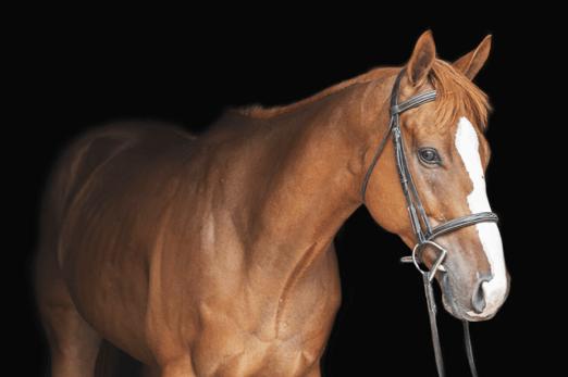 Horses Sales and Leasing | West Babylon, NY | Babylon Riding Center