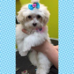 dog grooming concord nc