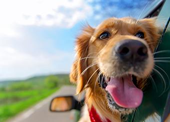 Veterinary care omaha ne animal center west omaha dog inside car veterinary care in omaha ne solutioingenieria Choice Image