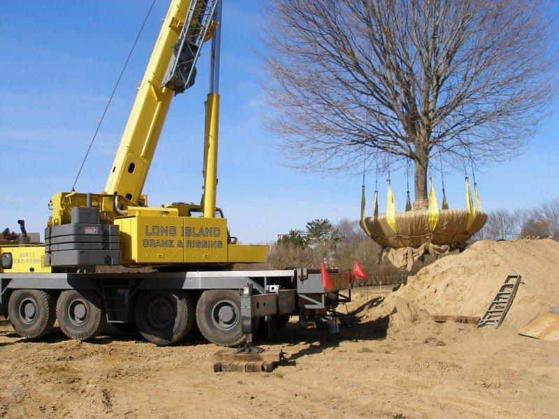 100 Ton Grove Transplanting a 40,000 lb Tree in Bridgehampton