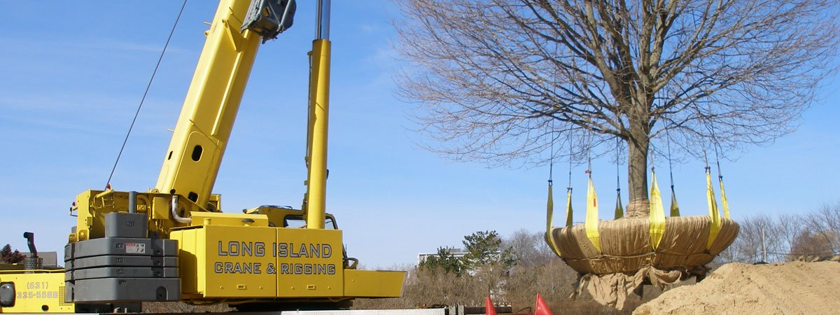 100 Ton Grove Transplanting a 40,000 lb Tree in Bridgehampton