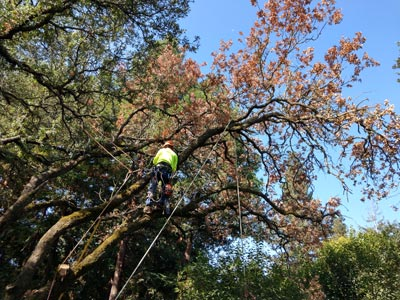 Tree Care Rancho Cordova Ca Tree Care Incorporated