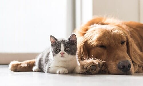 Kitten and Dog Snuggle Together — Veterinarian in Tallahassee, FL