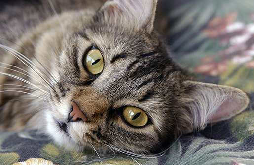 Why Does Your Cat Keep Drooling